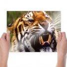 A Growling Tiger  Art Poster Print  24x18 inch