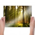 Pine Forest  Art Poster Print  24x18 inch