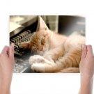 Sleeping Cat  Art Poster Print  24x18 inch