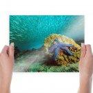 Blue Sea Star Schooling Baitfish Papua New Guinea Water  Art Poster Print  24x18 inch