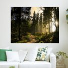 Sun Light At Pine Forest  Art Poster Print  24x18 inch