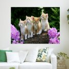 Curious Kittens  Art Poster Print  24x18 inch