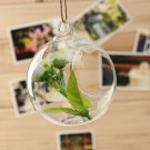 3 Pcs Set! Ball pattern Hanging Glass Vase Micro Landscape!