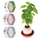 LUCKY POT PLANT EGGLING CRACK & GROW! - Mint, Basil, Wild Strawberry