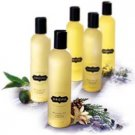 Massage Oil - Healing Blend