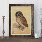 The Brown Owl Cross Stitch Chart by Albrecht Durer