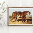 Stalking Tiger Cross Stitch Chart by Rosa Bonheur