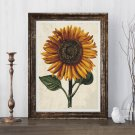 Sunflower with Background Cross Stitch Chart by Daniel Froesch