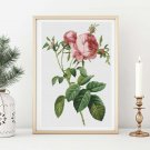 Rosa Centifolia Foliacea Cross Stitch Kit by Pierre-Joseph Redouté