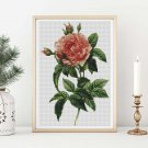 Rosa Gallica Regalis Cross Stitch Kit by Pierre-Joseph Redouté