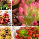 Authentic Chinese 100pcs Lithops Pseudotruncatella Plant Seed