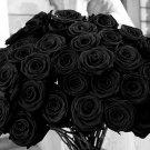 100 pcs Authentic Black Rose Colourful Seeds