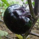 Round Eggplant Seeds Vegetable Seeds 20 Seeds db