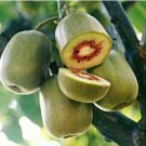 KIwi Fruit Seeds Actinidia Vine Seeds Fruit Seeds 100 Seeds db