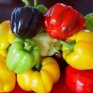Mix Color Bell Pepper Seeds Vegetable Seeds 20 Seeds