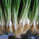 Bunching Onion Seeds Vegetable Seeds 400 Seeds