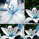 Blue Rare Lily Bulbs Seeds Planting Flower  50 Seeds
