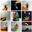 100 pcs mini orchid flower seeds