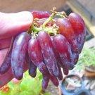 50Pcs Rare Finger Grape Seeds