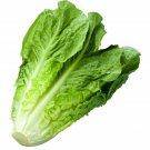 Romaine Lettuce Seeds | Non-GMO Vegetable Garden Seeds 1200 Seeds