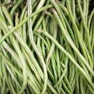 50 Yard Long Cowpea Bean Seeds   Heirloom Non-GMO