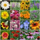 Wildflower Mix 15 Species Plant in Summer/Fall Non-GMO 500+ Seeds  ALL PERENNIAL