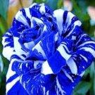 Blue Dragon Rose Seeds 20