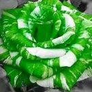 Green Dragon Rose Seeds 20