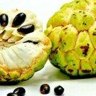 10 seeds Organic Sugar Apple Tree Seeds Annona Squamosa Tropical Sweetsop Plant seeds