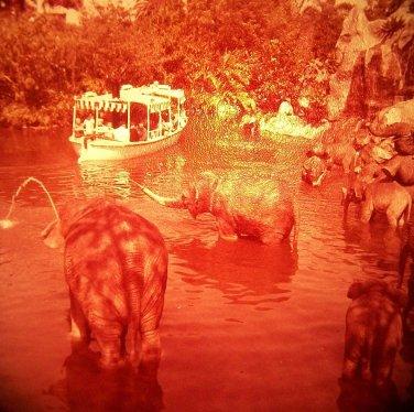 Disneyland 35mm ELEPHANT POOL Jungle Cruise Souvenir Slide PANA-VUE (Vintage) VP316