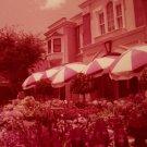 Disneyland 35mm FLOWER MARKET Souvenir Slide PANA-VUE (Vintage) VP11A3