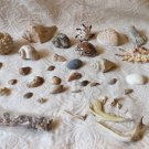 Cool Mixed Lot of Sea Shells Coral, Claws, Jaw bones