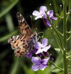 Butterfly - Original Fine Art Photography