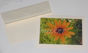 Blackeyed Susan - Original Fine Art Photograph Notecard