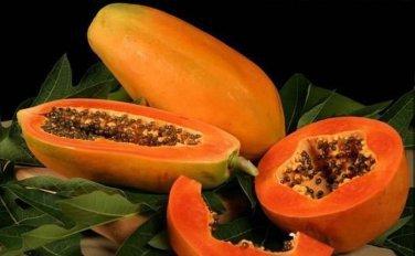 20 SEEDS FRESH BIG PAPAYA LOW SUGAR FOR DIET TROPICAL FRUIT SUPER JUMBO NON GMO