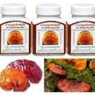 300 Capsules LINGZHI GANODERMA LUCIDUM REISHI HERBAL SUPPLEMENT HEALTH FOOD