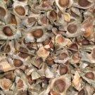 200 Organic MORINGA OLEIFERA Seeds for Asthma Cancer Diabetes Arthritis headache
