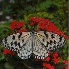Butterflies 2017-2018 2 Year Pocket Planner