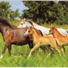 Young Horses Running on a Pasture - Puzzlebug - 650 Pieces Jigsaw Puzzle