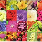 Summer Flowers Collage - Puzzlebug 650 Piece Jigsaw Puzzle