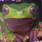 Menagerie 100 Piece Animal Puzzle ~ Green Frog