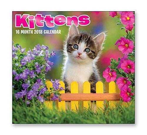 16 Month Wall Calendar 2018 - Kittens