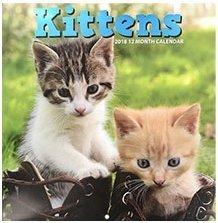Kittens 2018 12 Month Calendar