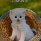 Kittens 2018-2019 2 Year Pocket Planner