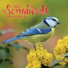 Songbirds 2018 Wall Calendar (16-month)