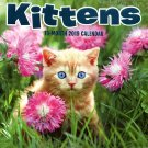 .16 Month Wall Calendar 2019: Kittens - Each Month Displays Full-Color Photograph.