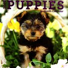16 Month Wall Calendar 2019: Puppies - Each Month Displays Full-Color Photograph.