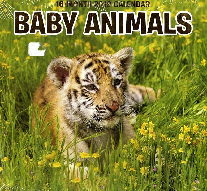 16 Month Wall Calendar 2019 Baby Animals. Each Month Displays Full-Color Photograph.