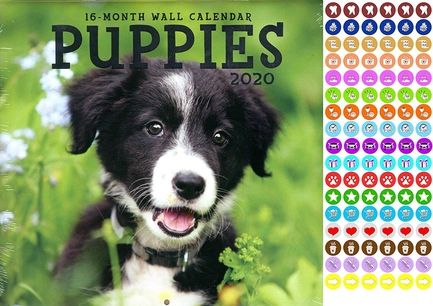 Puppies - 16 Month 2020 Wall Calendar (September 2019 - December 2020) - with 100 Reminder Stickers