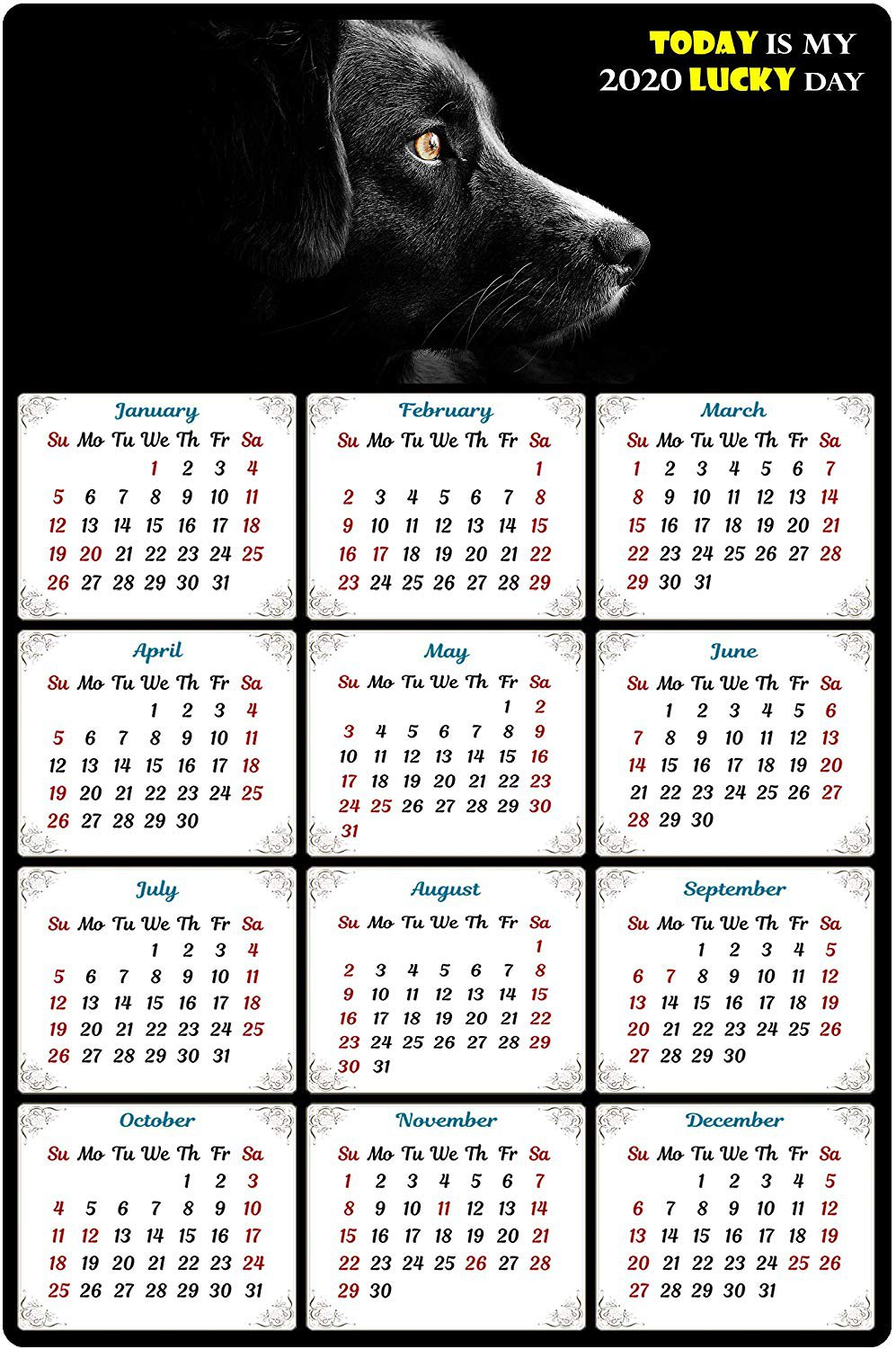 2020 Magnetic Calendar - Calendar Magnets - Today is My Lucky Day - Dog Themed 5